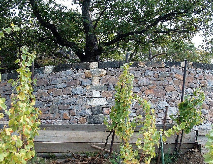 Stützmauer Weinberg